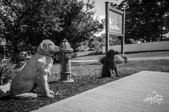 Dogs-084.jpg